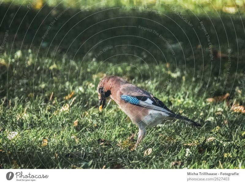 Nature Blue Green Animal Eating Yellow Environment Eyes Meadow Grass Orange Bird Illuminate Wild animal Stand To enjoy