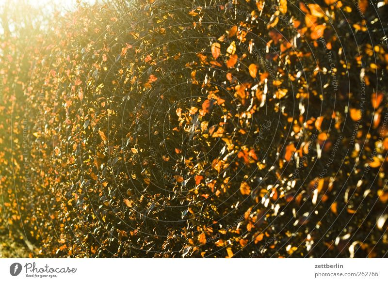 hedge Environment Plant Sunlight Spring Weather Beautiful weather Growth Hedge Back-light Brilliant Colour photo Exterior shot Detail Deserted Copy Space left