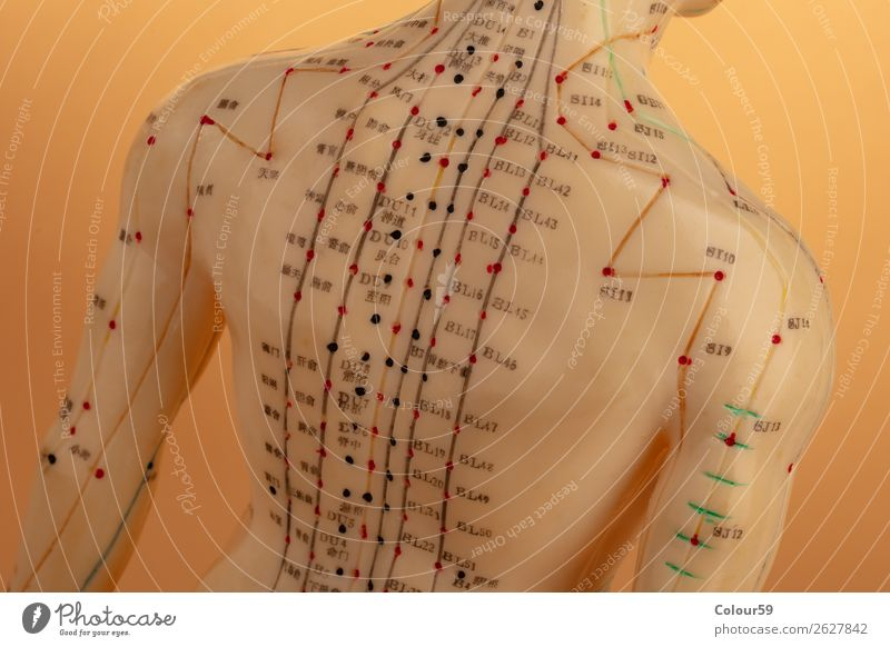 Back of acupuncture model Human being Relaxation Healthy Health care Chinese Model Background picture Alternative Beige Acupuncture Physiotherapy points Asian