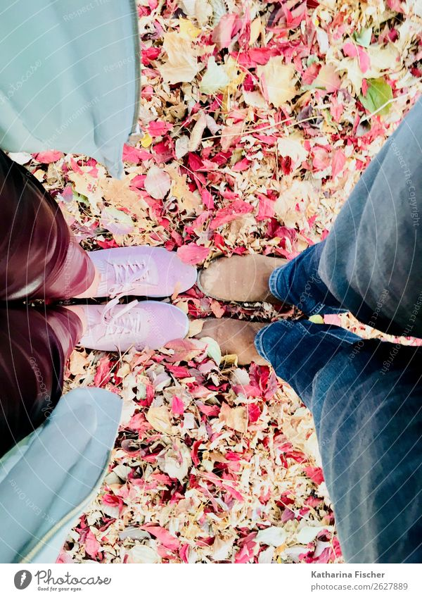 Stand by me Leaf Pants Cloth Leather Footwear Sneakers Blue Brown Multicoloured Yellow Green Orange Pink Red Legs Jeans Coat Clothing Autumn Together