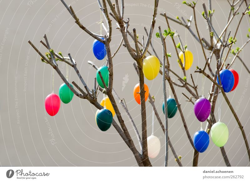Where's the purple egg? Decoration Feasts & Celebrations Easter Spring Blue Yellow Green Red Egg Easter egg Colour photo Multicoloured
