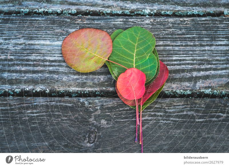 Colourful autumn decoration Autumn Leaf Illuminate Esthetic Multicoloured Yellow Green Red Emotions Contentment Transience Autumnal Autumnal colours Early fall