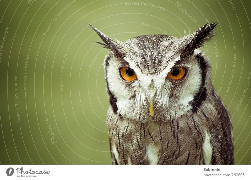 Green Animal Calm Eyes Gray Brown Bird Wild animal Feather Observe Ear Watchfulness Evil Beak Motionless Intensive