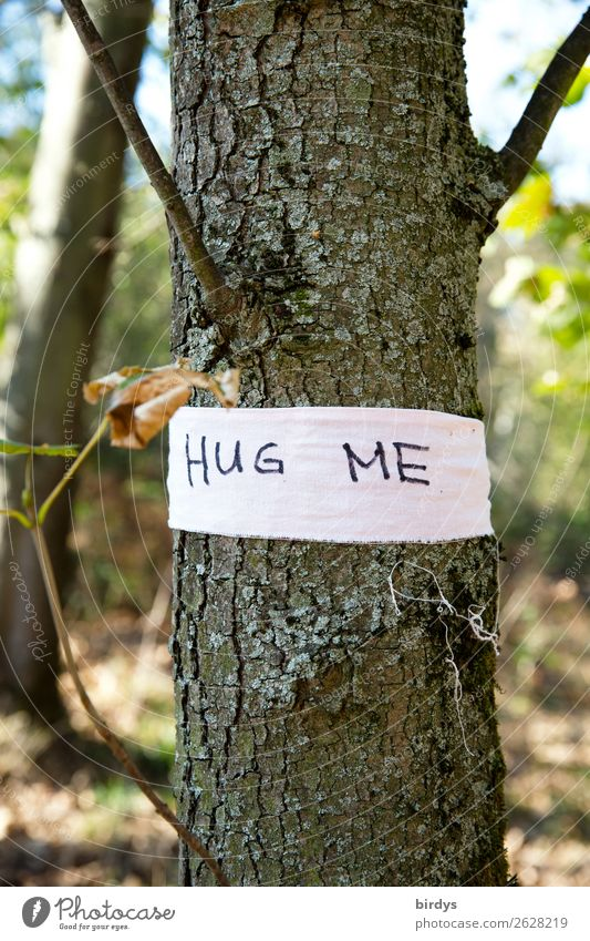 HUG ME Summer Beautiful weather Tree Wild plant Forest Characters String Touch Love Embrace Exceptional Friendliness Positive Joie de vivre (Vitality)