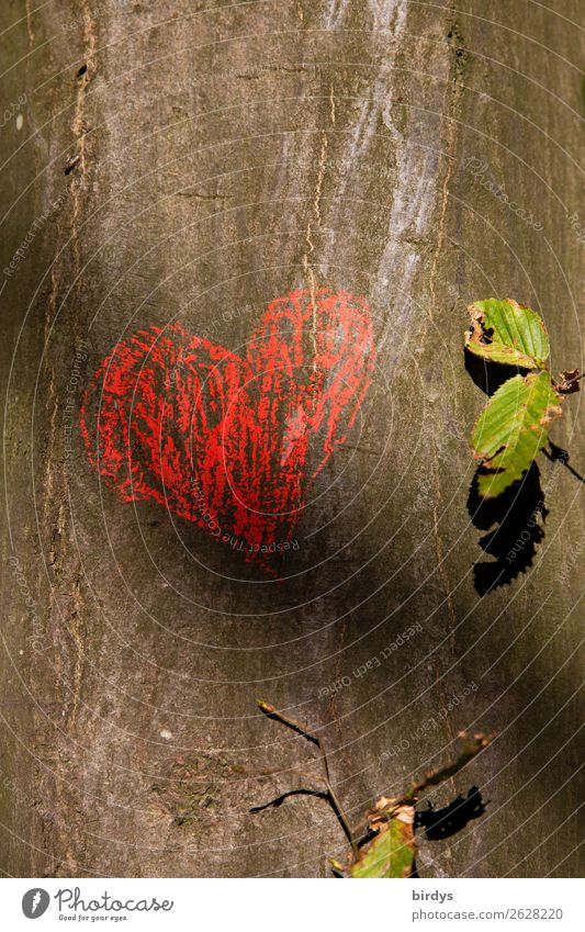 Nature Summer Green Red Tree Leaf Warmth Love Emotions Happy Gray Friendship Heart Authentic Joie de vivre (Vitality) Beautiful weather