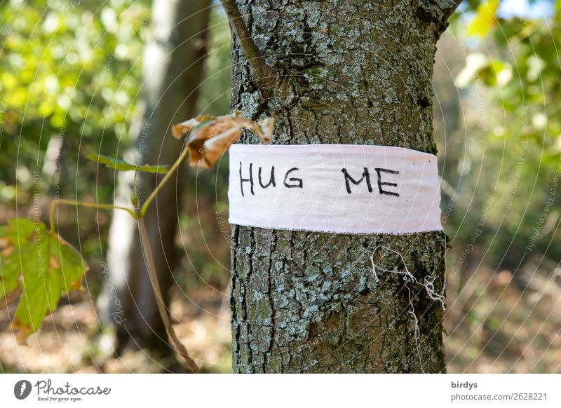 Give me a hug Nature Plant Summer Tree Wild plant Forest Characters String Embrace Exceptional Friendliness Positive Warm-heartedness Sympathy Friendship Love