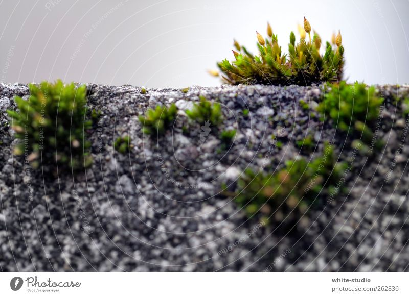 Jungle in the City Moss Sustainability Gray Green Fern city jungles Wall (barrier) Wall plant Carpet of moss Parasite Parasitic Growth Garden Root Vigor