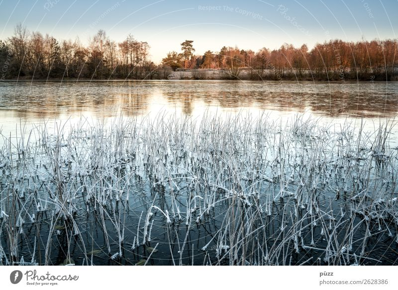 frrrr rost Environment Nature Landscape Plant Water Cloudless sky Winter Climate Beautiful weather Ice Frost Tree Grass Coast Lakeside Pond Cool (slang) Cold