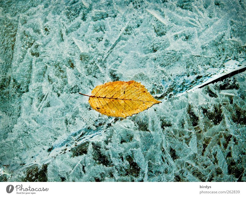 Leaf Winter Yellow Cold Lake Ice Exceptional Glittering Illuminate Esthetic Change Frost Frozen Autumn leaves Positive Picturesque