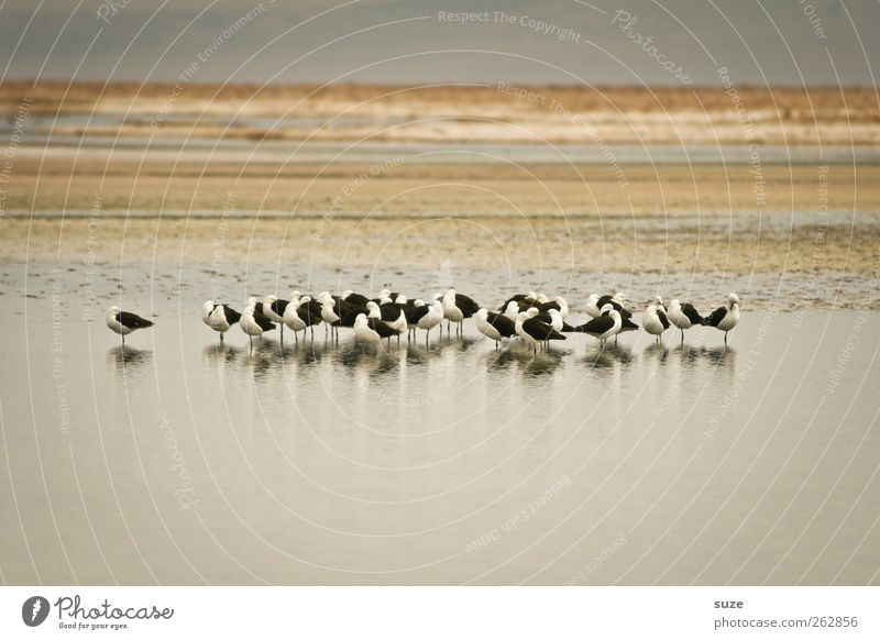 Sky Nature Summer Animal Calm Environment Landscape Lake Bright Earth Bird Wait Wild animal Climate Stripe Group of animals