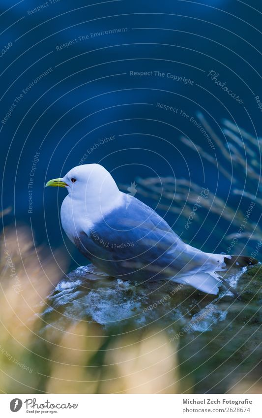 beautiful seagull sitting on a cliff in iceland Sky Nature Blue Colour Beautiful Landscape White Ocean Clouds Animal Art Freedom Bird Gray Wild Weather