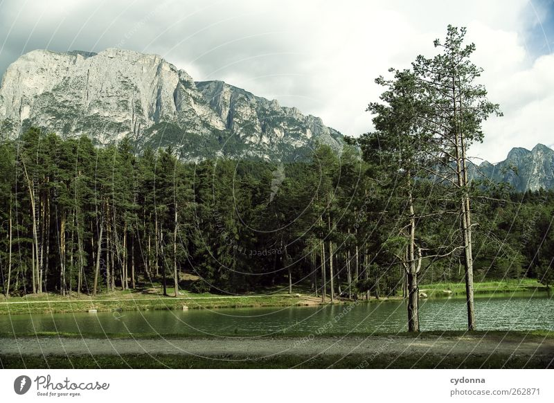 Forest lake with view to the Sciliar Relaxation Calm Vacation & Travel Tourism Trip Environment Nature Landscape Summer Tree Alps Mountain Lakeside Loneliness