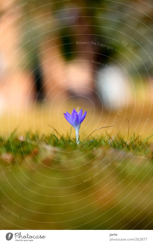 Nature Blue Beautiful Plant Flower Grass Spring Small Garden Park Natural Fresh New Beautiful weather Foliage plant