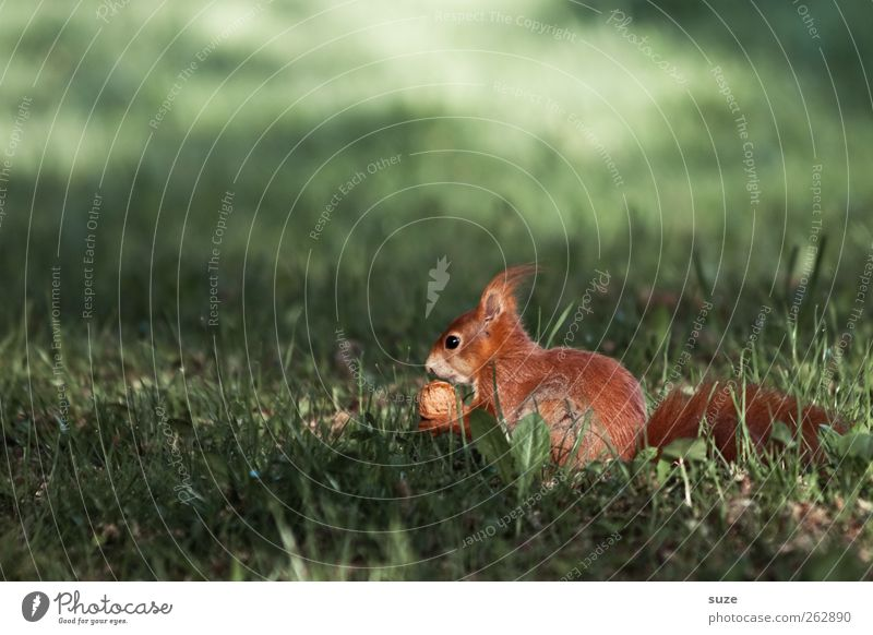 Nature Beautiful Green Plant Red Animal Environment Meadow Grass Small Sit Wild animal Authentic Cute Pelt Animalistic