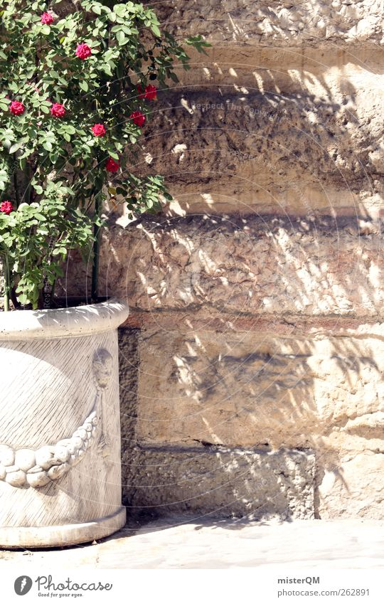 Green Summer Wall (barrier) Contentment Esthetic Decoration Rose Idyll Theatre Boredom Flowerpot Mediterranean Decent Indifference Wall plant Shadow play