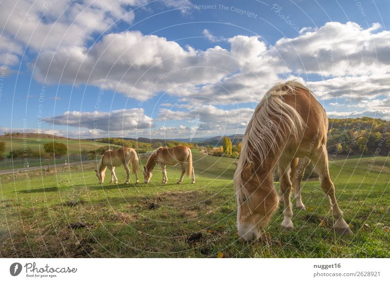 Horses in the meadow Environment Nature Landscape Plant Animal Sky Clouds Horizon Sunlight Spring Summer Autumn Weather Beautiful weather Grass Bushes Meadow