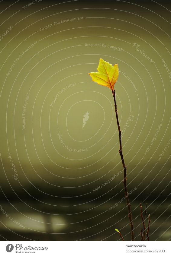 Nature Green Tree Plant Leaf Black Yellow Environment Autumn Warmth Small Gold Natural Tall Simple Beautiful weather