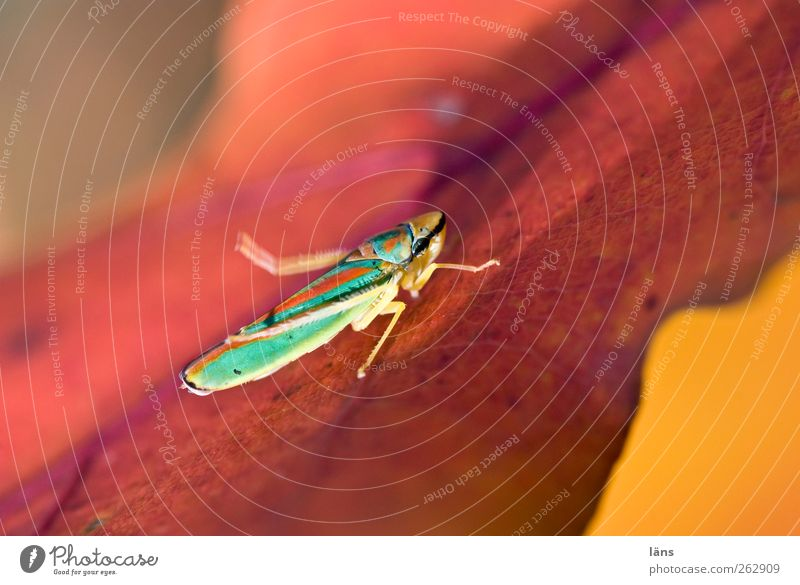 Nature Leaf Animal Environment Autumn Warm-heartedness Insect Sunbathing