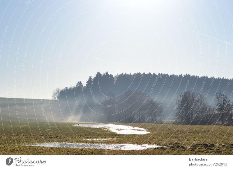 Nature Blue Water Tree Sun Winter Forest Landscape Spring Bright Field Fog Glittering Natural Illuminate Cloudless sky