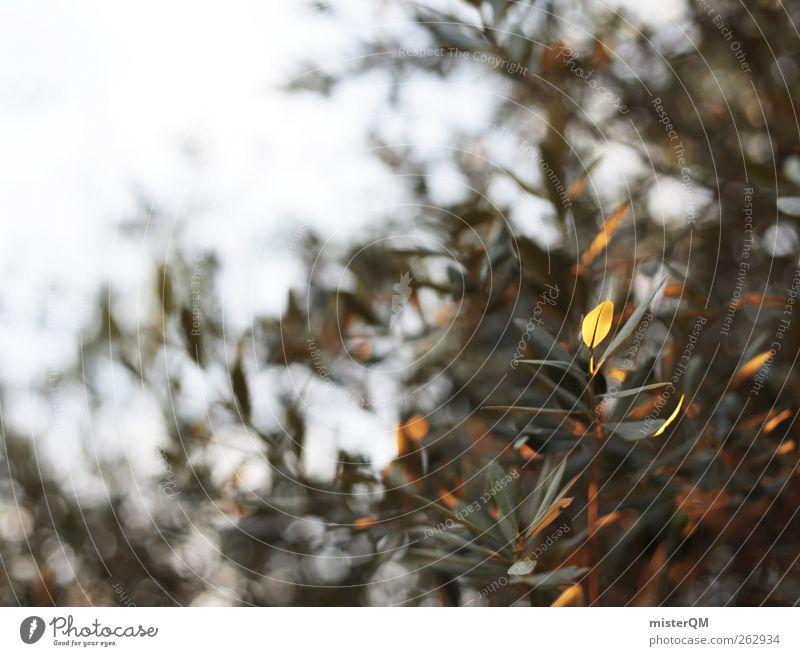 Summer Leaf Calm Art Contentment Wind Esthetic Summer vacation Mediterranean Remote Peaceful Olive Southern Olive tree Olive grove Olive leaf