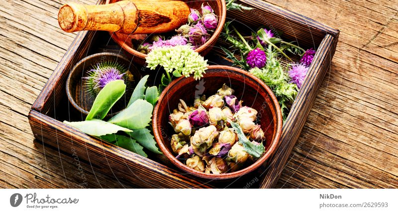 Set healing herbs herbal medicine medical plant natural healthy green nature flower fresh leaf treatment remedy aroma essential mortar wellness bunch medicinal