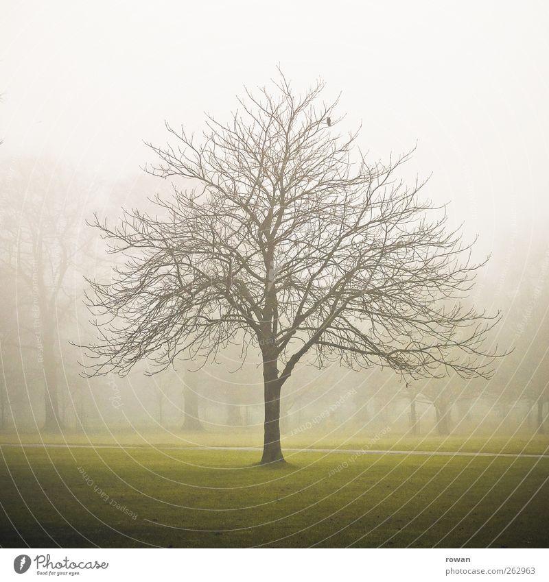 Nature Green Tree Winter Environment Dark Landscape Cold Autumn Park Fog Gloomy Transience Branch Creepy Storm