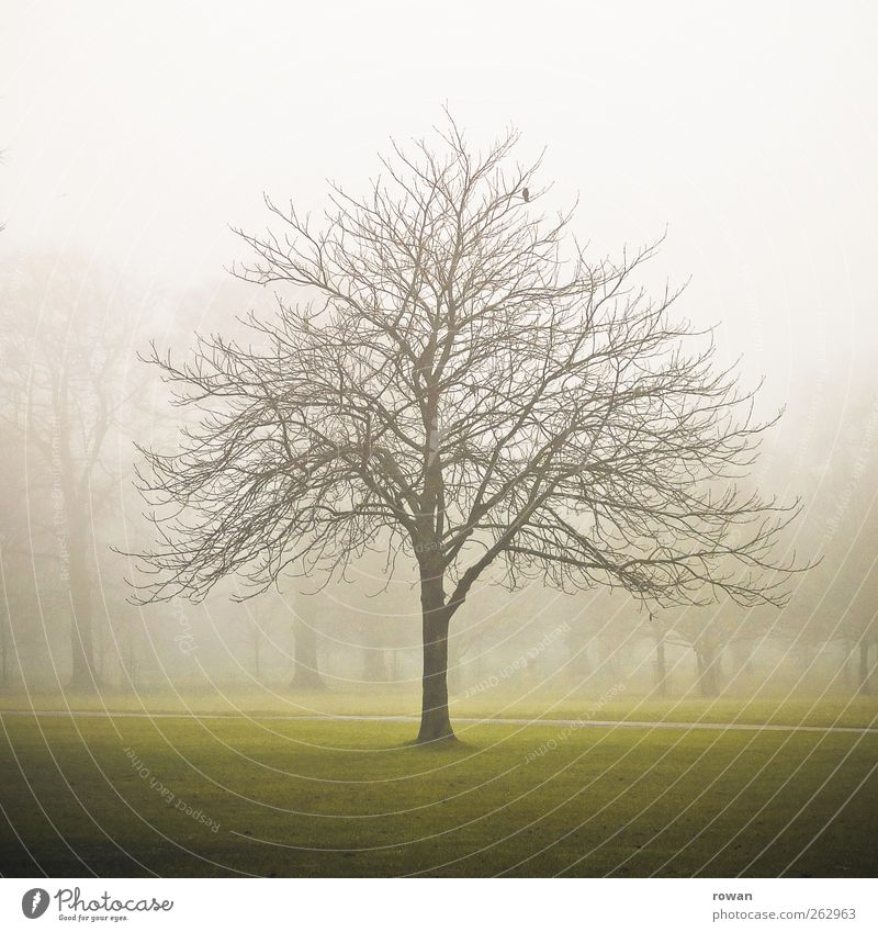 tree Environment Nature Landscape Autumn Winter Bad weather Storm Fog Tree Park Dark Creepy Cold Gloomy Green Transience Bleak Branch Branchage 1 Colour photo