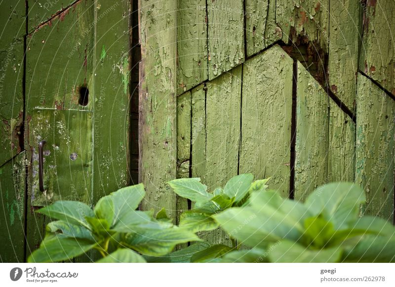red Environment Nature Plant Leaf Foliage plant Village House (Residential Structure) Hut Ruin Wall (barrier) Wall (building) Door Lock Door handle Wood Broken