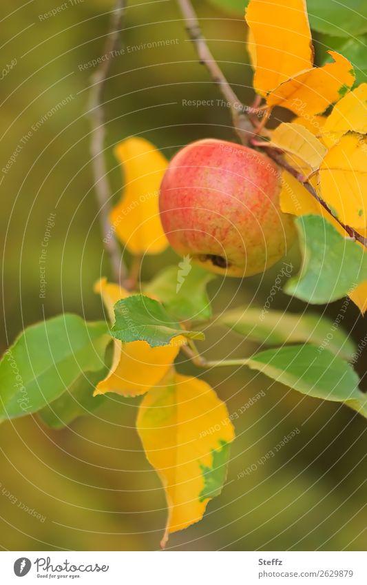 An apple on day VII Food Fruit Organic produce Vegetarian diet Diet Fasting Vegan diet Healthy Eating Nature Autumn Apple Apple tree Apple tree leaf Twig Garden