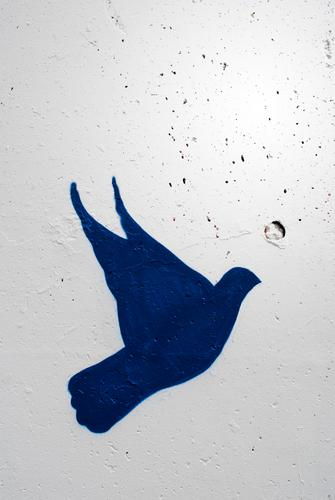 ! Animal Pigeon 1 Sign Flying Peace Dove of peace Graffiti Wall (barrier) White Blue Politics and state War Human rights Freedom Dictatorship Information