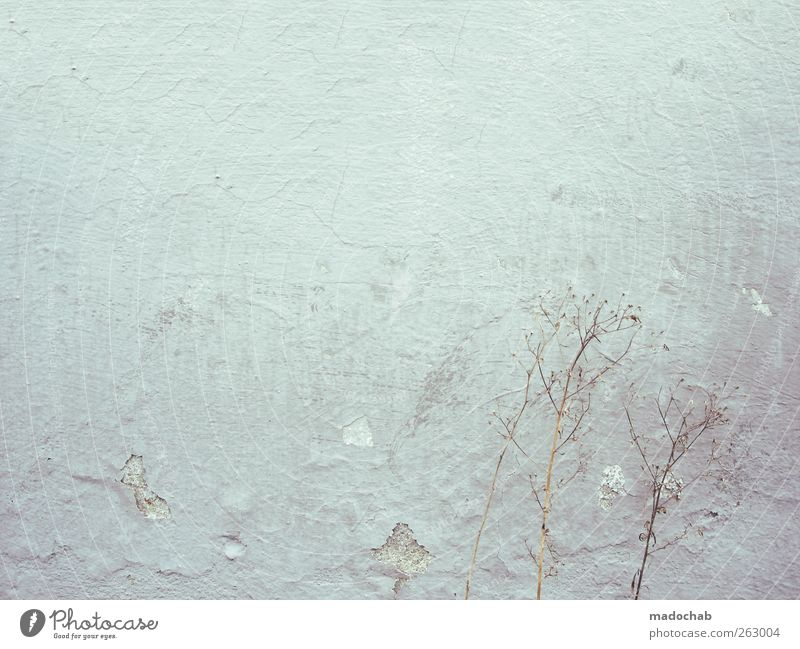 City Loneliness Cold Wall (building) Wall (barrier) Sadness Stone Dream Facade Dirty Elegant Concrete Free Esthetic Broken Hope