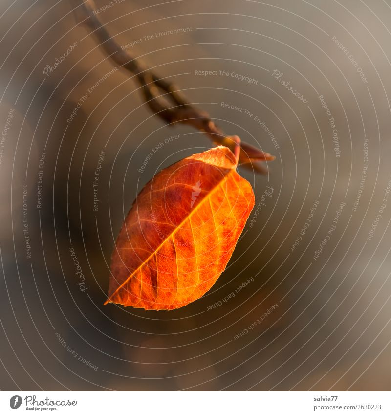 last sheet Environment Nature Autumn Plant Leaf Autumnal colours Illuminate Warmth Brown Yellow Orange Transience Change Rachis Exterior shot
