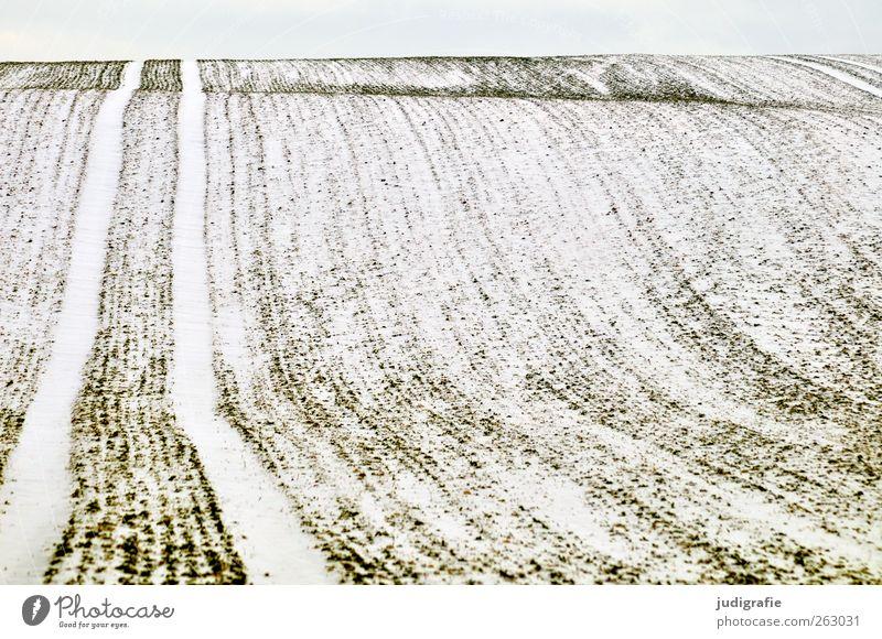 Nature Winter Calm Environment Landscape Cold Snow Field Climate Tracks Undulation