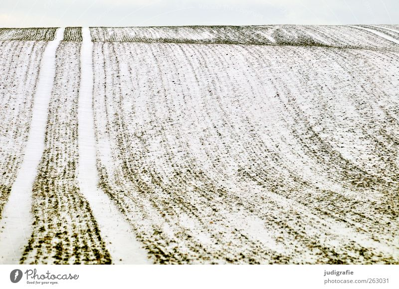 Uckermark Environment Nature Landscape Winter Climate Snow Field Cold Calm Tracks Undulation Colour photo Subdued colour Exterior shot Deserted