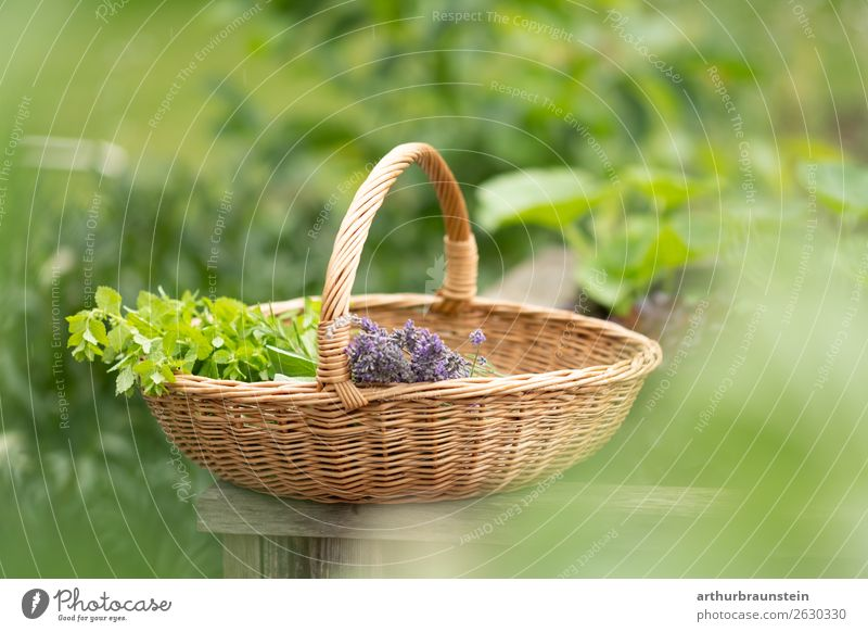 Freshly picked herbs in a basket Food Herbs and spices Nutrition Organic produce Vegetarian diet Lifestyle Shopping Healthy Healthy Eating Well-being
