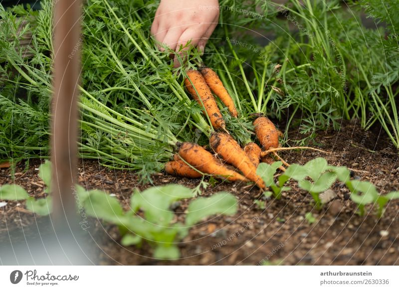 Human being Nature Healthy Eating Plant Food Environment Natural Garden Orange Work and employment Leisure and hobbies Nutrition Fresh Field Earth
