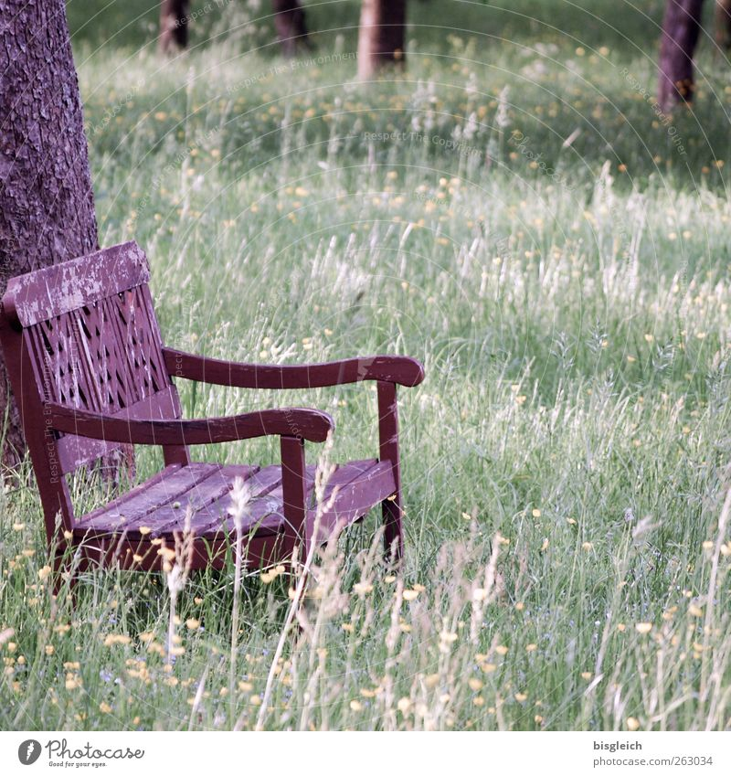 bank in the green Summer Tree Grass Meadow Forest Bench Wood Sit Old Brown Green Calm Contentment Loneliness Inspiration Colour photo Subdued colour