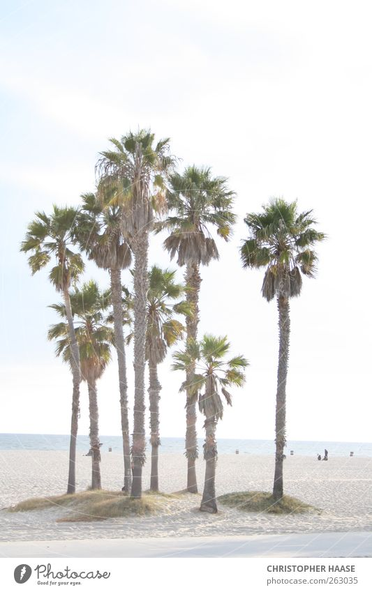 PALMS VENICE BEACH Nature Sand Sky Horizon Summer Beautiful weather Palm tree Beach Ocean Vacation & Travel Colour photo Exterior shot Day Central perspective