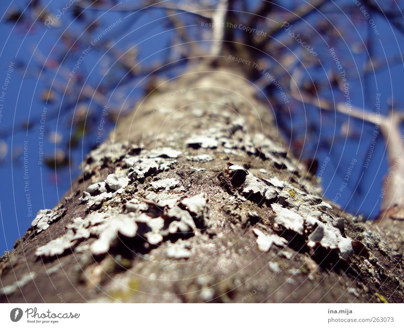 tree Nature Sky Cloudless sky Spring Autumn Winter Beautiful weather Tree Moss Blue Brown Gray Spring fever Fear of heights Tree trunk Branch Tree bark Plant