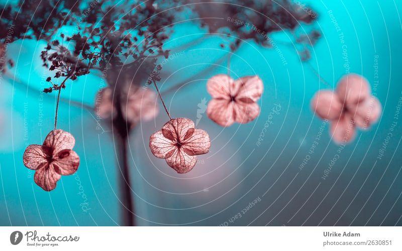 Nature Plant Blue Flower Winter Autumn Blossom Sadness Garden Pink Decoration Park Illuminate Transience Soft Grief