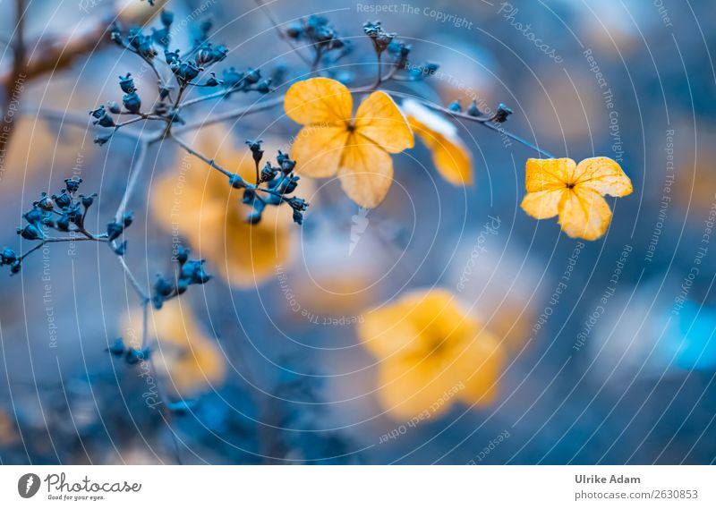 Nature Plant Blue Flower Relaxation Calm Winter Autumn Blossom Natural Garden Orange Design Contentment Decoration Illuminate