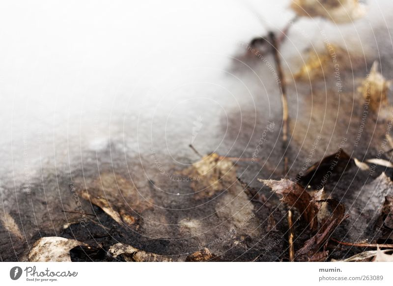 Frozen Nature Winter Ice Frost Leaf Lakeside Brown White Colour photo Exterior shot Copy Space left Copy Space top Shallow depth of field