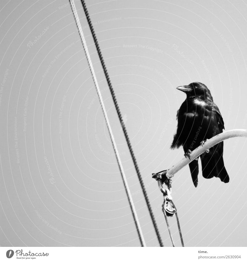 Looking For Adventure Navigation On board Rope Iron-pipe Wild animal Bird 1 Animal Observe To hold on Sit Wait Maritime Black Watchfulness Serene Patient Calm