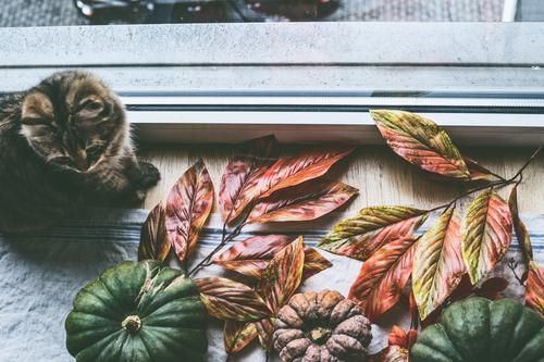 Cat House (Residential Structure) Relaxation Animal Window Lifestyle Autumn Interior design Style Living or residing Design Flat (apartment) Decoration Pet