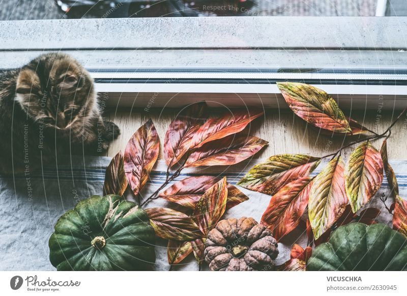 Domestic Still Life with Cat and Pumpkins at the Window Lifestyle Style Design Relaxation Living or residing Flat (apartment) House (Residential Structure)