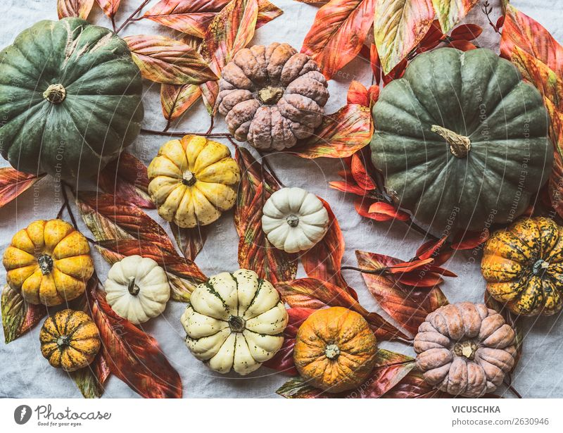 Healthy Eating Food Background picture Autumn Style Design Decoration Shopping Vegetable Collection Autumn leaves Autumnal Difference Hallowe'en Pumpkin