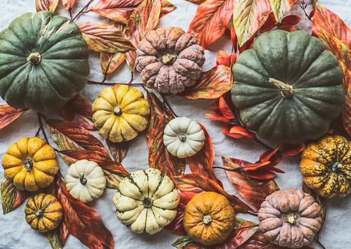 Various pumpkins with autumn leaves Food Vegetable Shopping Style Design Healthy Eating Hallowe'en Autumn Decoration Collection Background picture Pumpkin