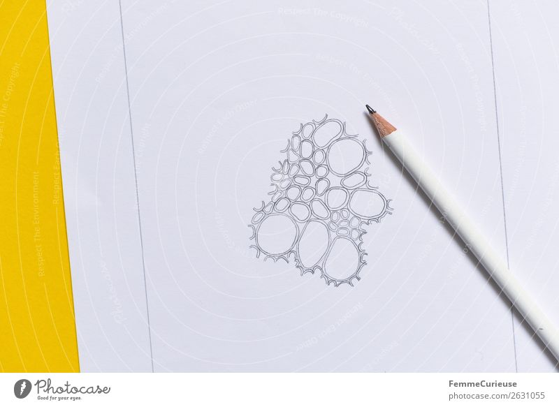 Drawing: Cells from the vascular bundle of a dicotyledonous stem Nature Biology biology lessons School Lessons Education Pencil Conceptual design Prison cell