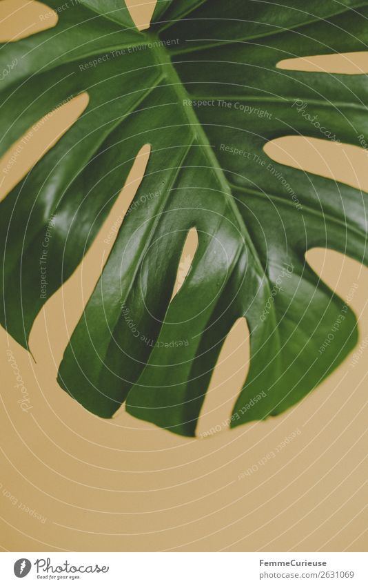 Nature Plant Green Yellow Paper Foliage plant Part of the plant Monstera