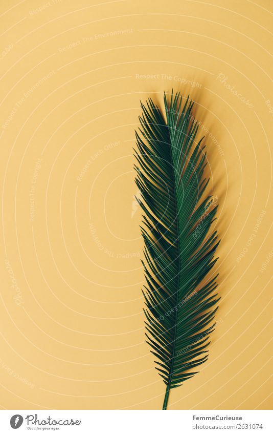 Palm branch on yellow background Nature Palm frond Yellow Plant Part of the plant Palm tree Neutral Background Foliage plant Stalk Colour photo Studio shot